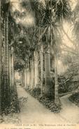 ARBRE(GOLFE JUAN) - Trees