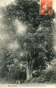 ARBRE(BONNETABLE) - Trees