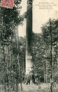 ARBRE(LA FEUILLIE) - Trees