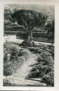 ARBRE(TENERIFE) - Trees