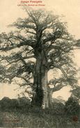 ARBRE(CONGO) - Trees