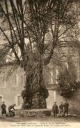 ARBRE(VIVIERS) - Trees