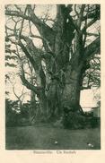 ARBRE(BRAZZAVILLE) - Trees