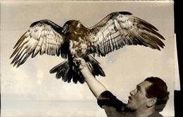 PHOTO - Photo De Presse - Télévision - émission Consacrée à L'aigle - Série Animage - Célébrités