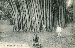 ARBRE(MADRAS) - Trees