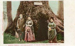 ARBRE(SANTA CRUZ) - Trees