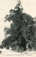 ARBRE(SAINTE FEYRE) - Trees
