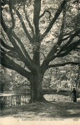 ARBRE(SAINT LEU) - Trees
