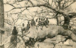 ARBRE(SENEGAL) - Trees