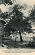 ARBRE(PARIS) - Trees