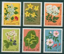 3018 Bulgaria 1981 Flora Medicinal Herbs MNH /Weissdorn Johanniskraut Schwarzer Holunder Brombeere Silberli/Heilpflanzen - Nuovi