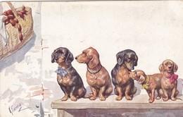 Dackel Teckel Dachshund  Chien K.Feiertag  Cpa. Old Dog Postcard. BKWI. 706-5 - Chiens