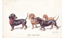 Dackel Teckel Dachshund  Chien  K.Feiertag  Cpa. Old Dog Postcard. BKWI. 706-3    1913 - Chiens