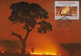CARTE MAXIMUM - MAXICARD - MAXIMUMKARTE - MAXIMUM CARD - MOZAMBIQUE - CAMPAGNE NATIONALE POUR LE CONTRÔLE DE BRÛLÉ - Mozambique