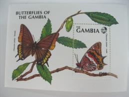 Gambia-Butterflies - Schmetterlinge