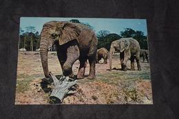 Eléphants En Liberté Dans La Réserve Africaine Du Chateau De Troiry-en-Yvelines Vierge (10) - Elephants