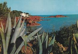 83-----DANS L'ESTEREL--la Côte Vers Le Dramont Et Ses Rochers Rouges--voir 2 Scans - France