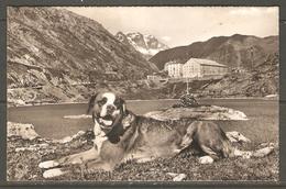 Carte Postale Du Grand St Bernard ( Hospice ) - VS Valais