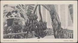 POS-762 CUBA POSTCARD. 1901. BUFFALO EXPO. PLANTA DE PLATANO. BANANA TREES. - Cuba