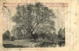 ALLEMAGNE 050517 - HAMBURG - STELLINGEN B HAMBURG - Weinschmidt's Alte Eichen - Ansicht Der Grossen Weide Am Teiche 1900 - Stellingen