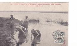 26225 VIET NAM - TONKIN - Doson Vie Champs -femmes Ramassant Herbes Aquatiques Nourriture Cochons - 352 Dieulefils - Viêt-Nam