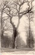 LE HAVRE  Forêt De Montgeon  -  Le Chêne Creux âgé De Deux Siècles Avenue 3 Chemin, 4. E. J - Le Havre
