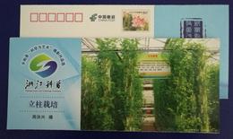 Vertical Plantation Vegetable,Awarding Artwork Of Science Art Photography Competition,CN11 Science Popularization PSC - Vegetables
