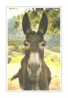Animaux - Ane - Collection Corse - Codenet / Photo Philippe Crochard - Negroni (non Circ.) - [Esel / Donkey / Burro] - Burros
