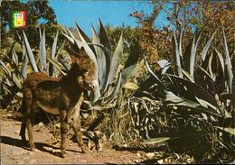 Costa Del Sol Malaga Coat Of Arms Donkey - Spain