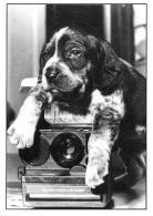 [MD1176] CPM - PATOUF - PHOTO VERGARA - CANI - Non Viaggiata - Cani