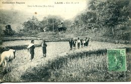 N°25 N -cpa Laos -dans La Rizière- (Hua Pahn) - Laos