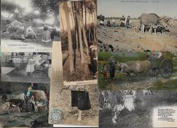 Lot 296 De 10 CPA Divers Métier Campagne Ferme Folklore Déstockage Pour Revendeurs Ou Collectionneurs - Cartoline