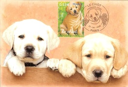 HB-P 058 Carte Maximum 2006 Chiots Le Labrador N°3898 - Cartes-Maximum