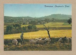 Israel Old Postcards  Bethlehem Shepherd's Field Places Of The Bible - Israel