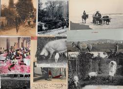 Lot 307 De 10 CPA Divers Métier Campagne Ferme Folklore Déstockage Pour Revendeurs Ou Collectionneurs - Cartes Postales