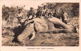 RHODESIE / Elephant Shot Near Inyanga - Chasse - Ansichtskarten