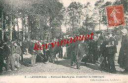 Landerneau - Foire Aux Boeufs Gras - Inspection Vétérinaire