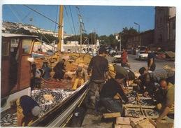 Les Sardine Mises En Boite : Retour De Pêche En Méditerannée (n°35/457/486 Sl) - Fishing