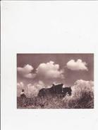 Machines Agricoles Aebi - Cheval ... - Cultures