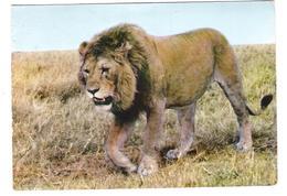 Gabon - Gabonaise - Lion - Loewe - 2x Nice Stamps - Gabun
