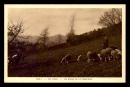 88 - VAL D'AJOL - LES BREBIS DE LA GRAND-MERE - Francia