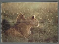 U9646 Animali LEONI LIONS NATIONAL GEOGRAPHIC SOCIETY (m) - Leoni