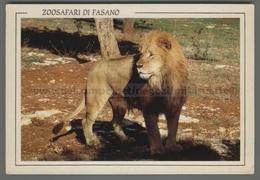 U9647 Animali LEONE LION ZOO SAFARI DI FASANO (m) - Leoni