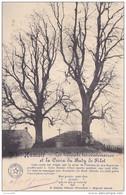 Filot-Hamoir - Les Tilleuls Tri-centenaires Et La Croix Du Baty De Filot (animée, Arbre Remarquable)