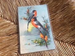 [Illutrateur-Klein] : Oiseaux - Klein, Catharina