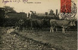 13180 - Yvelines -  TRAPPES :  LE LABOUR  ,  LA CHARRUE A 4 BOEUFS  ET LA LOCOMOTIVE DERRIERE  Trés   RARE 1906 - Trappes