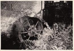 Photo Originale Moulin Molen Aan De Ploten Sint Katarina - Luoghi