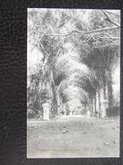 Singapore 8 Entrance Botanical Garden 1913 With Stamp - Singapore