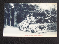 Singapore 2 Bullock Driven By Chinese Cca 1910 - Singapore