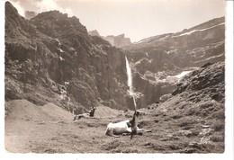 Animaux-Chèvres,Chèvre-Biquettes-Gavarnie-le Cirque Et La Grande Cascade  -Réal-Photo - Animaux & Faune